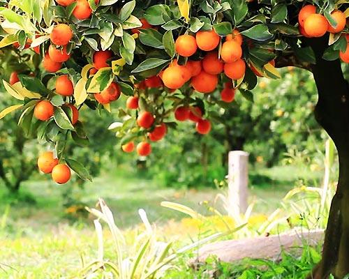 آهک کشاورزی چیست, کاربرد آهک در کشاورزی, فروش آهک کشاورزی,